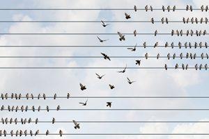 Reorganiseren in het licht van de NOW: uitstel, afstel of actie?