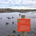 Gevonden op Texel- het recht van eendenkooi
