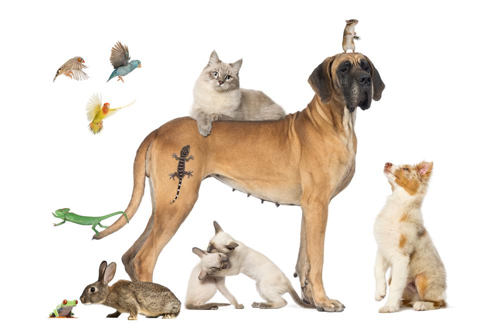 artikel-juristen-dierenrecht-mr-online