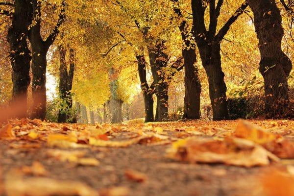 Herfst start met boeteregen