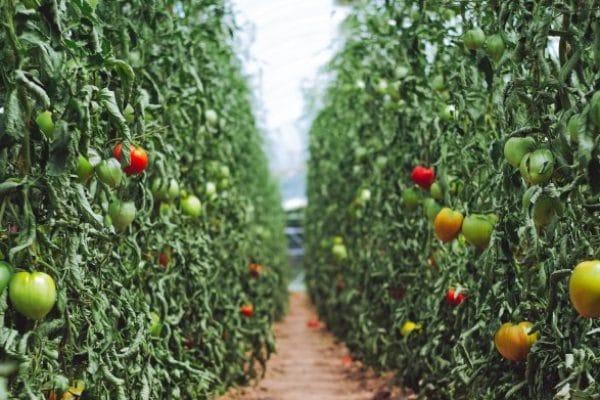 NGB_Afbeelding_JDW_Transitie naar een duurzame landbouw