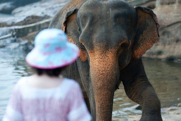 Feel good Friday: olifant