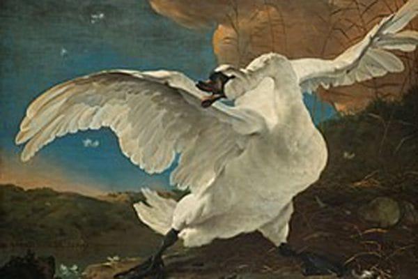 zwaan van Jan Asselijn